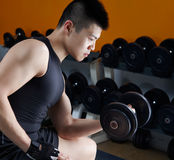 Body building. Asian man working out in gym using dumbbell Stock Image