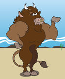 Body Building Buffalo Stock Photo