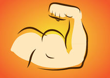Body building / Fitness. Flexing Muscle of Strong Arm/Bicep Royalty Free Stock Images