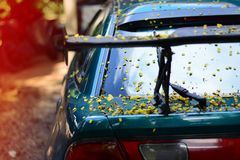 The body of car dirty from flowers and leaves.  Royalty Free Stock Image