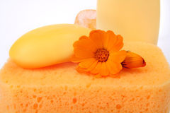 Body care things Stock Images