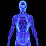 Body with digestive system Royalty Free Stock Photography