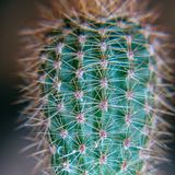 Green cactus with protruding needles royalty free stock photos