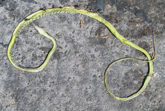 Body of green snake Stock Photography