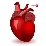 Body heart with veins in a simple comic style. Valentine's Day humor card. Anatomical heart, detailed illustration. Human organ. Realistic red heart vector Royalty Free Stock Images