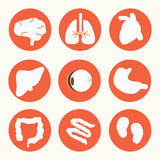 Body icon,vector Stock Photography