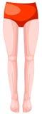 Body legs Stock Image