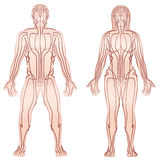 Body Meridians Man Woman Couple. Body acupuncture meridians of man and woman - alternative therapy tcm treatment infographic -  vector illustration on white Royalty Free Stock Photos