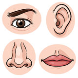 Body part. Vector illustration of depicting the 4 senses Stock Images