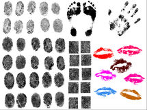50 Body part vectors very detailed. 50 Body part vectors Hands, feet Lips very detailed royalty free illustration