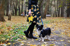 Body part of woman with  her Border Collie dog in the autumn park Stock Image