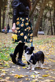 Body part of woman with  her Border Collie dog in the autumn park Stock Photo