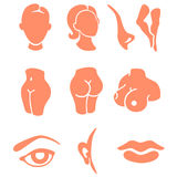 Body parts and face zones icon set Royalty Free Stock Photo