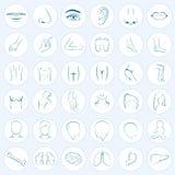 Body parts, five senses. Human body parts, five senses, organs, medical vector icons Royalty Free Stock Images