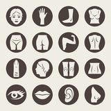 Body parts. Human body parts  icon set Stock Images