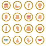 Body parts icons circle. Gold in cartoon style isolate on white background vector illustration Stock Photo