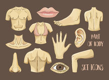 Body Parts Icons Set Royalty Free Stock Photo