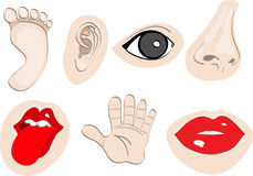 Body Parts set 2. An illustration of human body parts Royalty Free Stock Photos