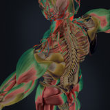 Body scan. A futuristic scan of a human body with a thermal image Royalty Free Stock Image