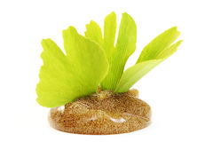 Body scrub. On white - beauty treatment Stock Images