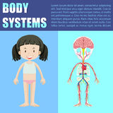 Body system diagram of girl Royalty Free Stock Photography