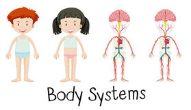 Body systems of boy and girl Royalty Free Stock Images