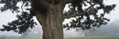 Body OF a tree Royalty Free Stock Photo