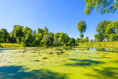 Body of water in the park is overgrown mud Royalty Free Stock Photography