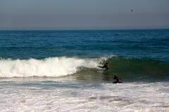 bodyboarder som fångar en våg på stranden Vina del Mar, Chile Royaltyfria Foton