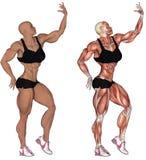 Bodybuilder anatomique de femme Photo libre de droits
