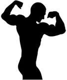 Bodybuilder back double biceps Stock Photography