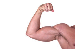 Bodybuilder biceps. Isolated on white background royalty free stock photography