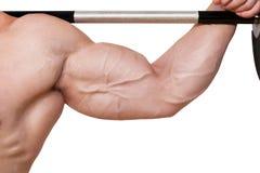 Bodybuilder biceps detail. royalty free stock photos