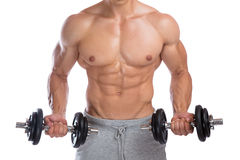 Bodybuilder bodybuilding muscles dumbbells biceps training body. Builder building power strong muscular man isolated Royalty Free Stock Photography