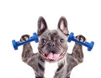 Bodybuilder d'athlète de chien Images libres de droits