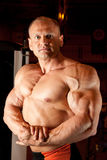 Bodybuilder demonstrates his muscles Stock Image