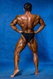 Bodybuilder des athletischen Sports demonstriert Lage von der Rückseite Stockfotografie