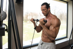 Bodybuilder Doing Heavy Weight Exercise For Biceps Royalty Free Stock Photography