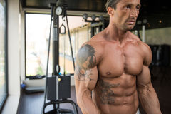 Bodybuilder Doing Heavy Weight Exercise For Biceps Stock Photos