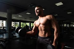Bodybuilder Exercising Biceps With Dumbbells. Man Working Out Biceps In A Gym - Dumbbell Concentration Curls royalty free stock images