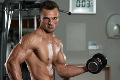 Bodybuilder Exercising Biceps With Dumbbells Stock Images