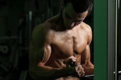 Bodybuilder Exercising Biceps In A Gym Royalty Free Stock Image