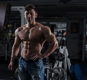 Bodybuilder in the gym Royalty Free Stock Image