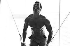 Bodybuilder hard training in the gym Stock Photography