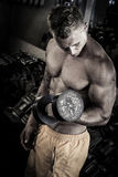 Bodybuilder lifting weights in the gym. Bodybuilder lifting a dumbbell in the gym royalty free stock photos