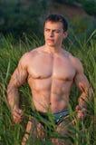 Bodybuilder masculino fotografia de stock royalty free