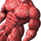 Bodybuilder musculaire sur le blanc Images libres de droits
