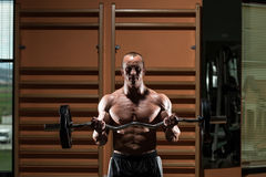 Bodybuilder Performing Biceps Curls With A Barbell Stock Photography