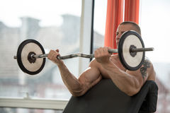 Bodybuilder Performing Biceps Curls With A Barbell Stock Images