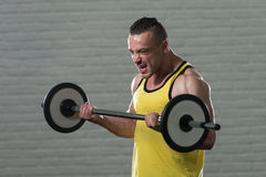 Bodybuilder Performing Biceps Curls With A Barbell Royalty Free Stock Images